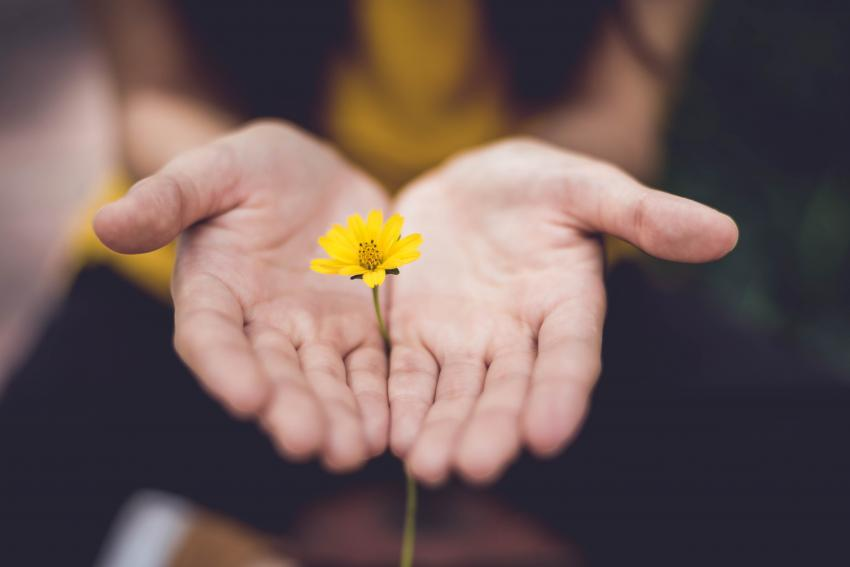 Someone holding a flower in-between their palm